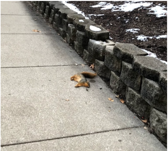 I'm going 'nuts' over our campus squirrels